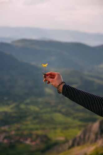 person holding yellow flower
